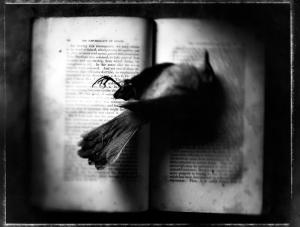 Kernan_Book_Bird