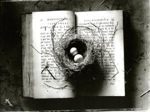 Kernan_Book_Nest
