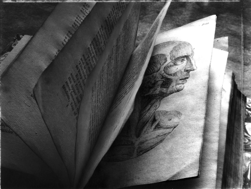 Book_Anatomy